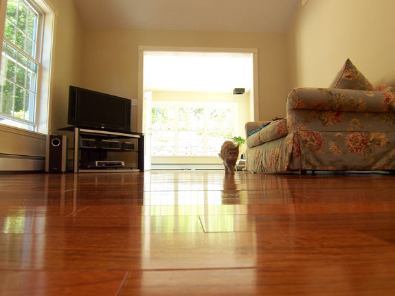 Cat walking on new Brazilian Cherry Hardwood Floor
