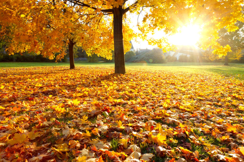Top Tips For Home Maintenance In The Fall A Checklist